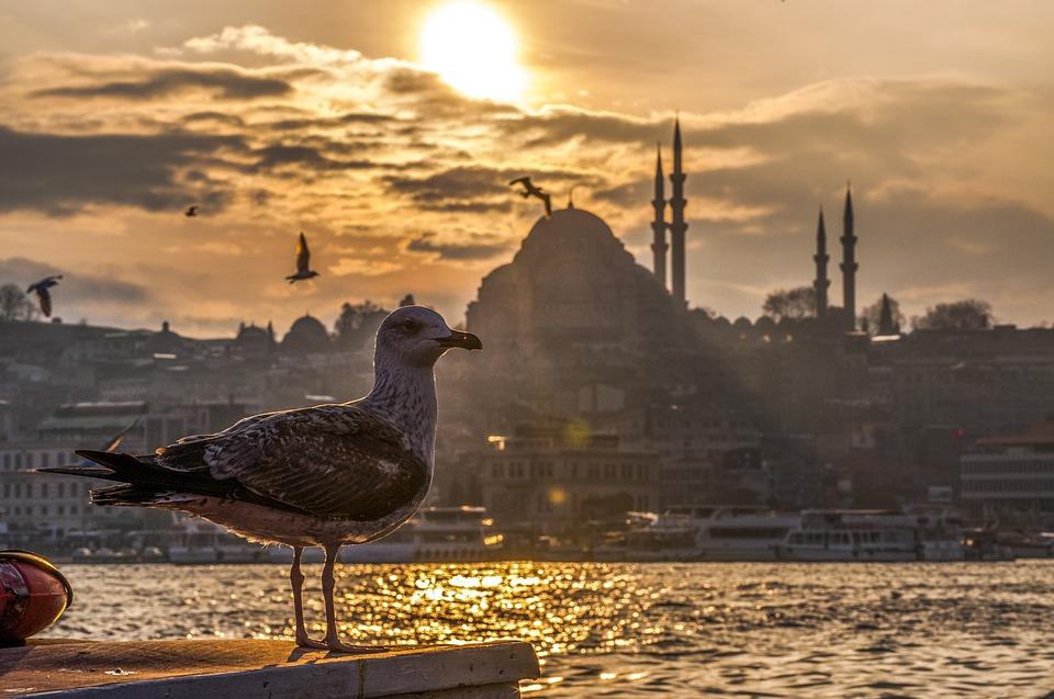 Turquie pour senior célibataire